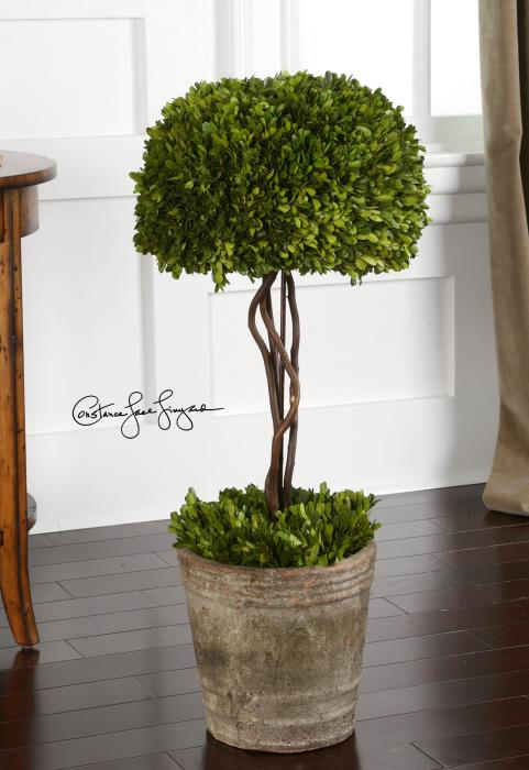 Uttermost 60095 Preserved Boxwood, Tree Topiary - фото 1